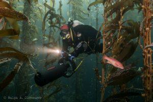 diving through the kelp