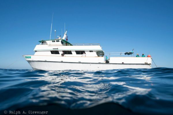vision-deep-sea-boat