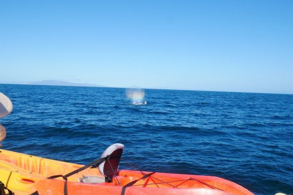 whale sighting from the sunfish