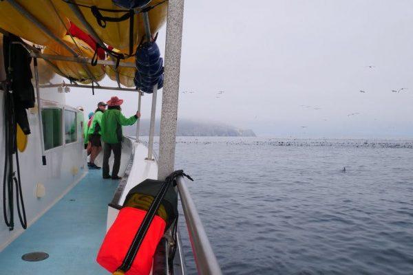 wildlife viewing around channel islands