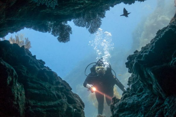diving the sea caves of the channel islands