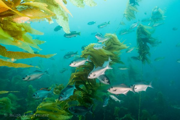 sea life around the channel islands