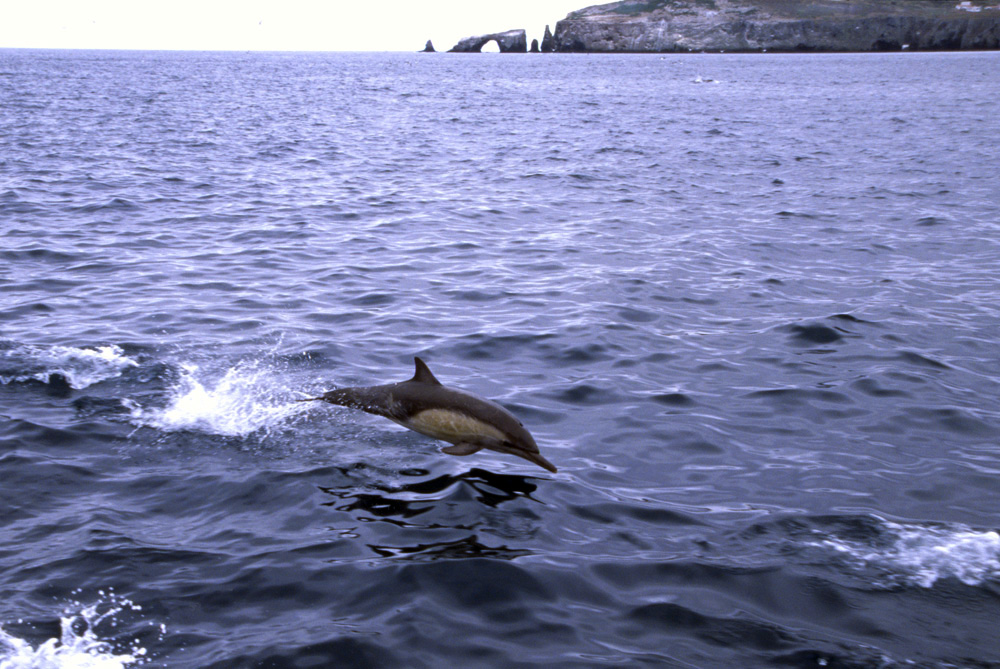 dophin captured jumping out of the water
